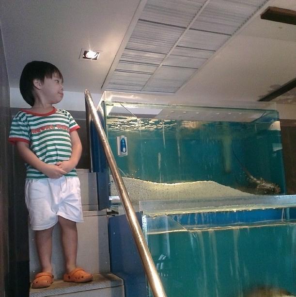 ไปร้าน Homano Suchi เป็ปตื่นเต้นมาก ไม่ใช่กุ้งและปลาในตู้นะ แต่สามารถเดินขึ้นไปจับแอร์บนเพดานได้มากกว่า #AirConLover